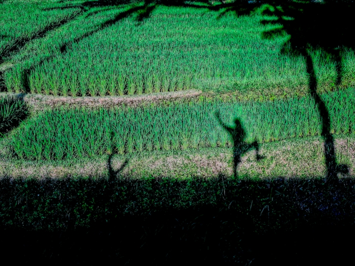 2 PaddyShadow 0514 E1SM