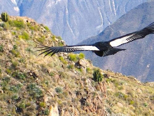 Condor2 4684 E1SM