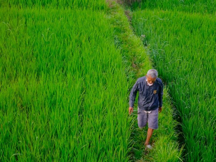 18a RiceWalk 3928 E1SM