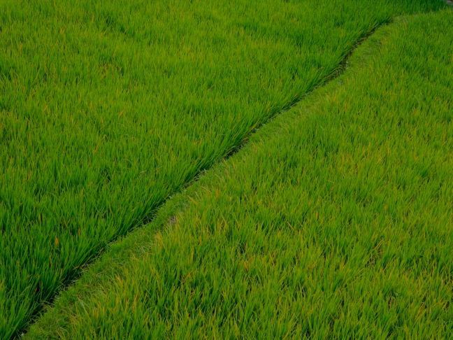 1b RiceHalf 3883 SM