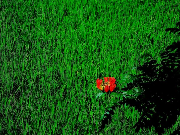30 Rice+orange 3759SM