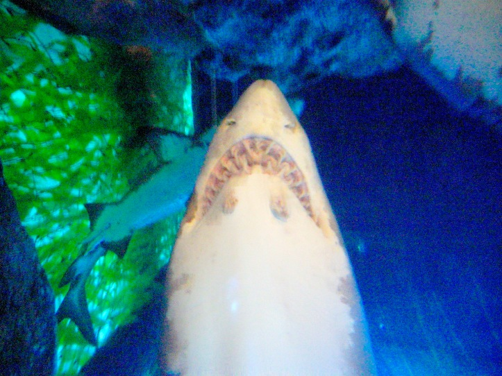 4 SharkTEETH 3550 E1SM