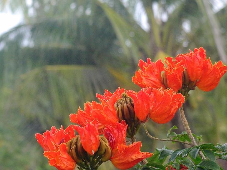 7 OrangeKarcret E1SM