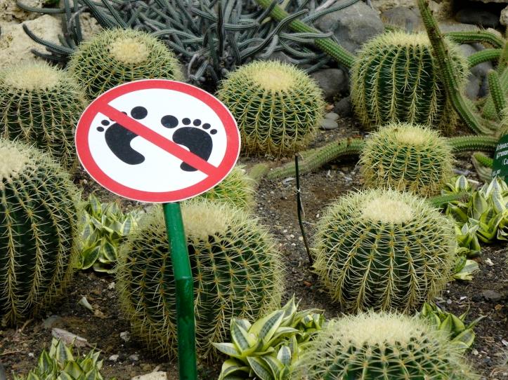 01 CactusSign 4149SM