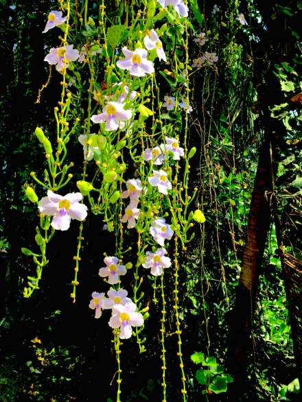 12 orchidVine 1694 E1SM