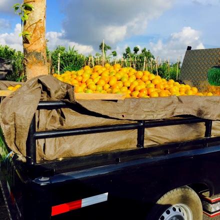 1cf Oranges Truck E1SM