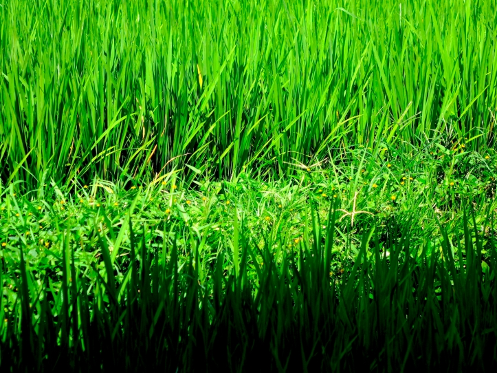 2 RiceDarkFront 4106 E1SM