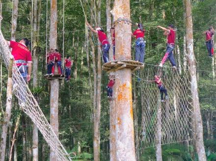 3 TreeTop 4142 E1SM