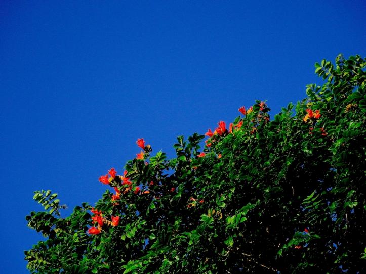6 TreeOrangeBlue 4132 E1SM