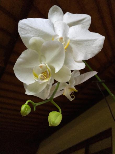 6b OrchidWhite 2093E1SM