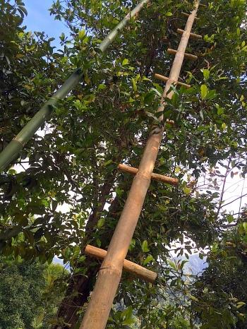 23 LadderUp 1340 Esm
