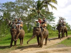 Photo: Elephant Safari Park