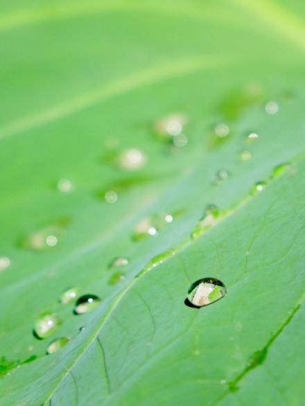 4 Leaf-Drop E SM
