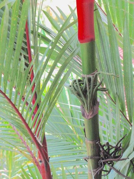 5 BambooRed 4386 E SM