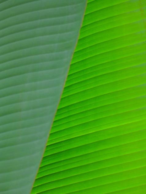 2 Leaf 1296