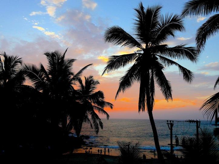 16 palm sunset 6272sm