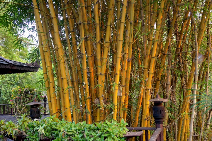 8 Bamboo 8199