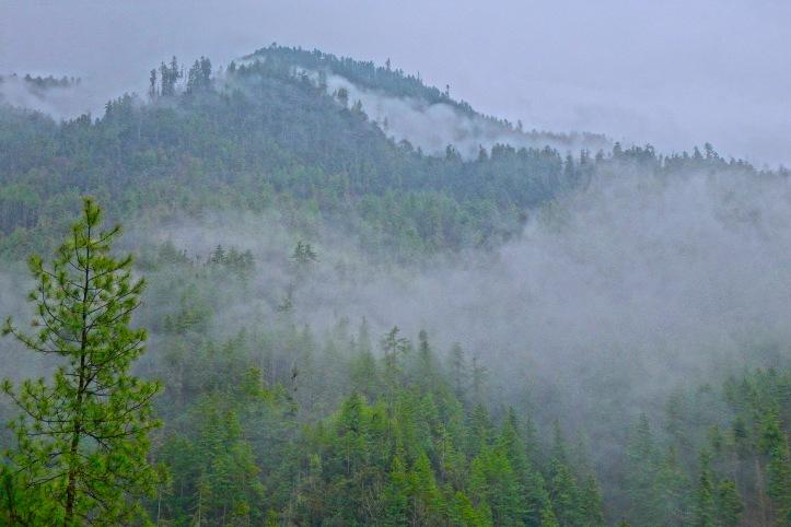 10 Mtn Mist 9666