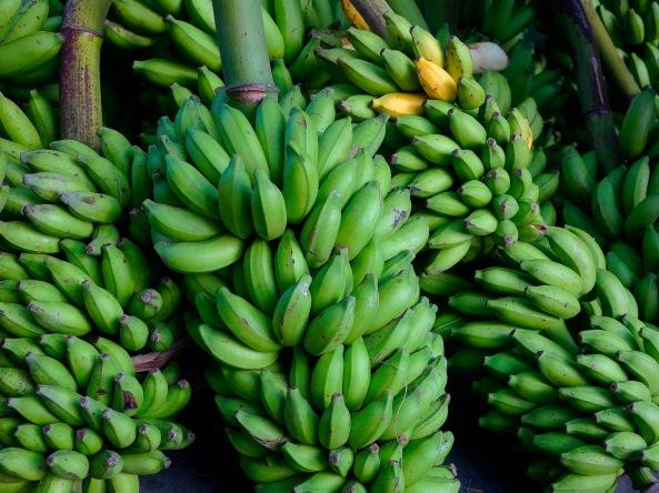 2a Banana Stalks 5977