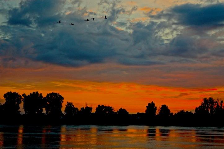 1 Danube Geese 3488 E2SM