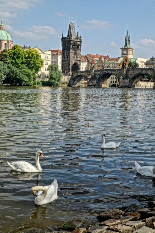 22-swans-tower-2173esm