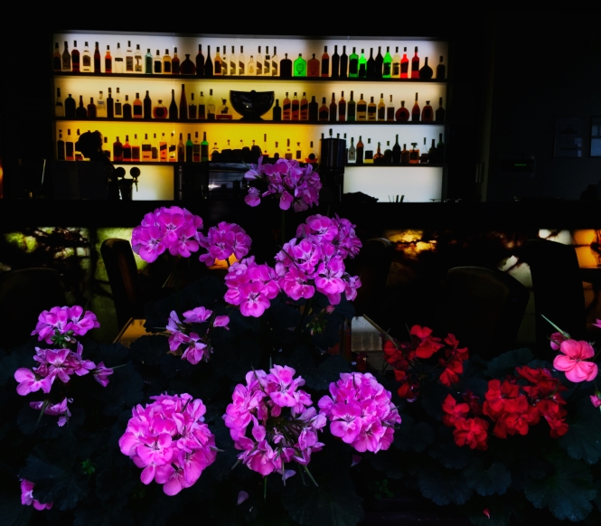 bar with flowers night - Prague