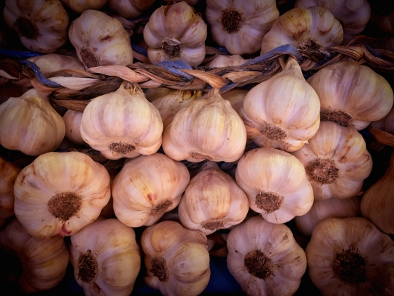 garlic bulbs close-up