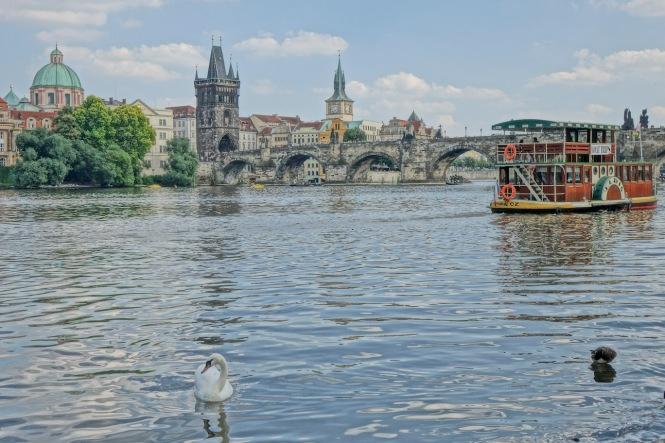 Prague, Charles Bridge, swan