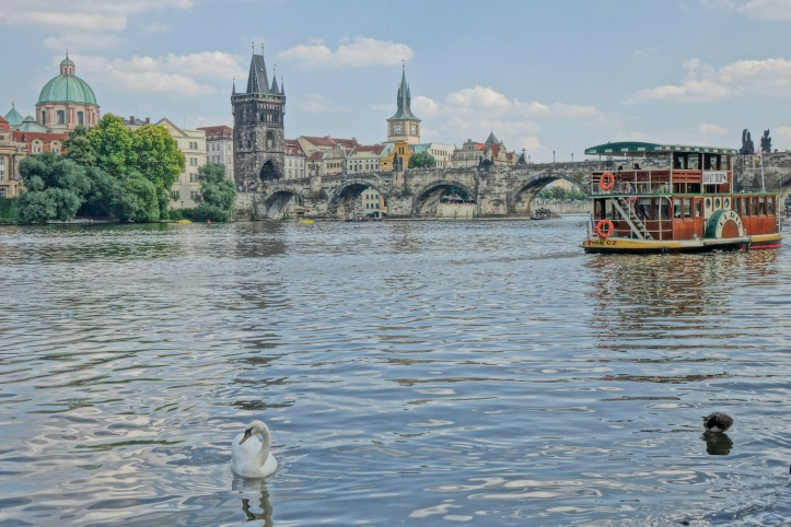 Prague, Charles Bridge, swan