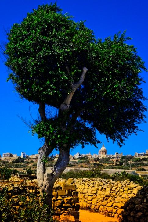 Gharghar Tree, Gozo, Malta