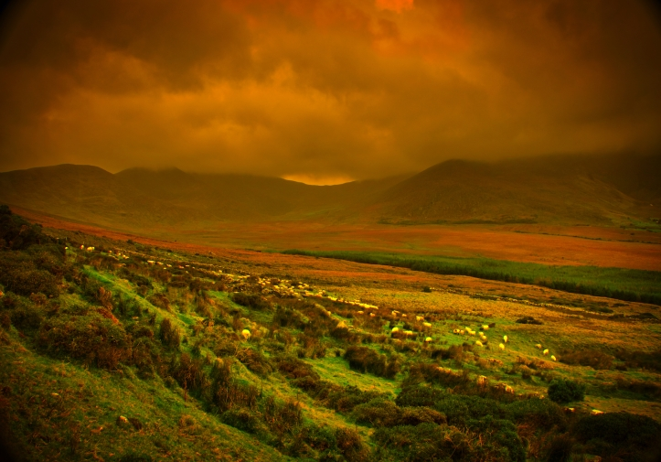 Ireland storm over grasslands, sheep graze