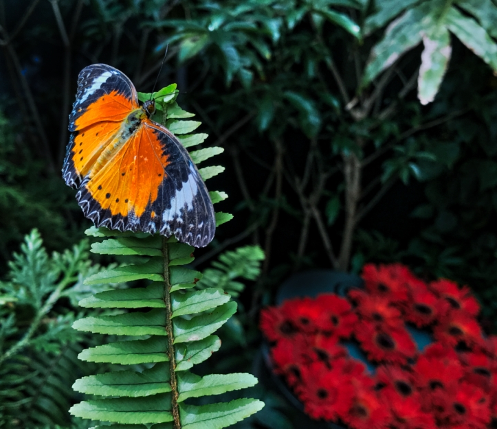Butterfly Garden Changi Airport
